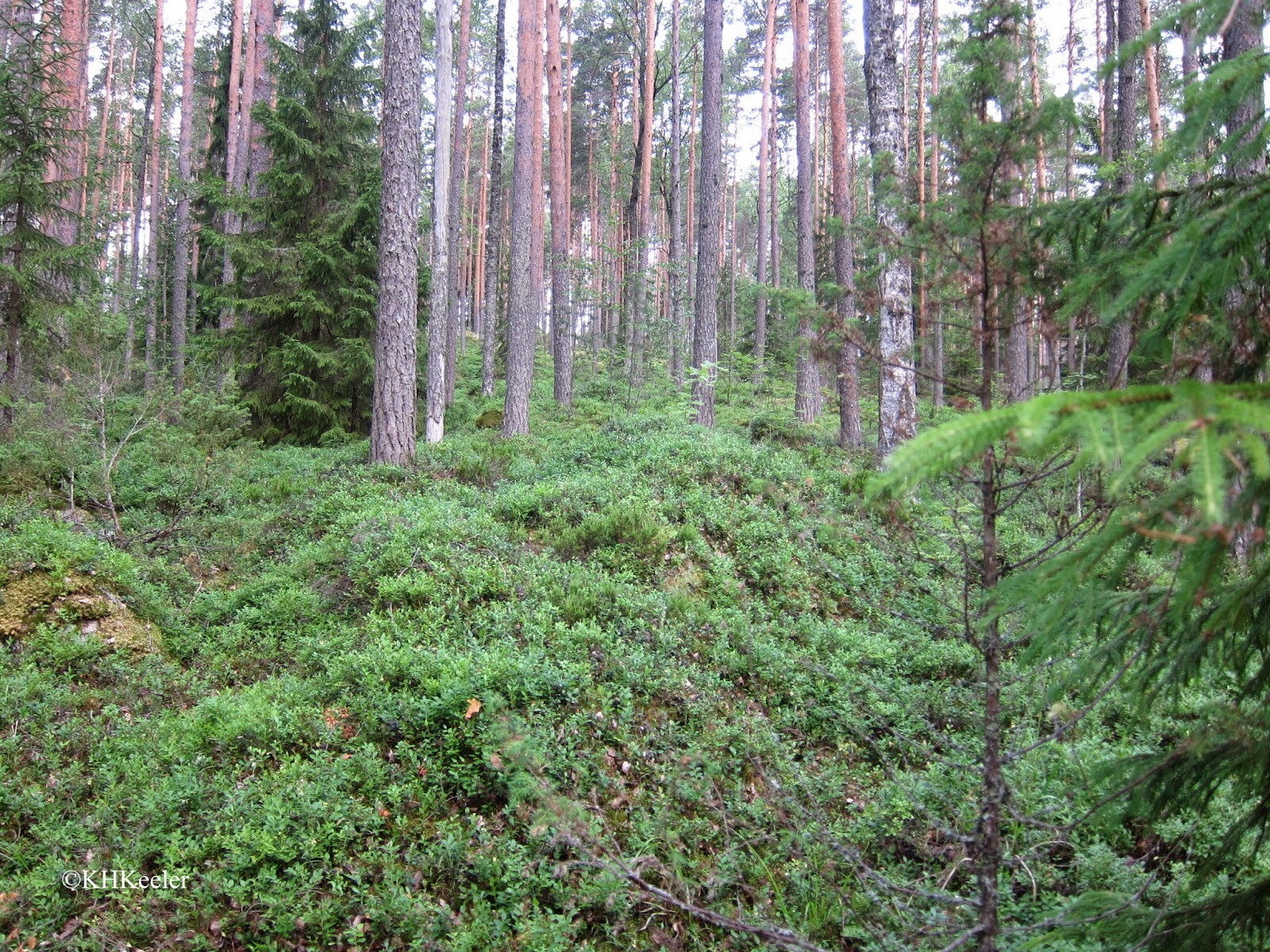 forest grove, Finland