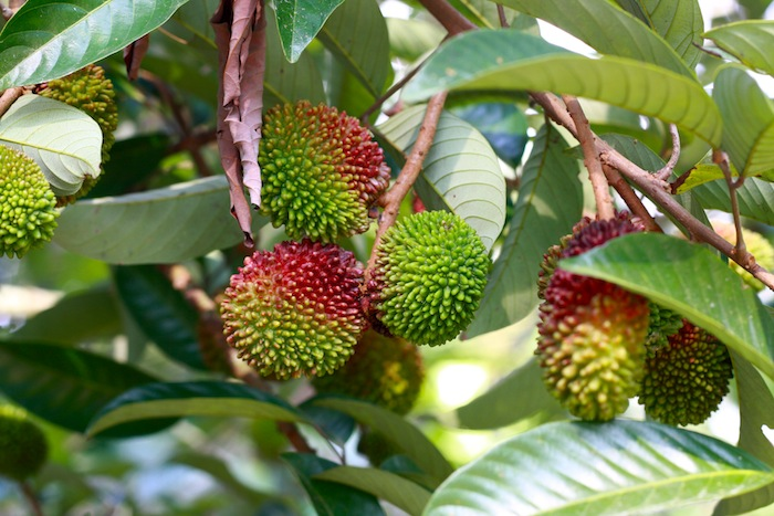 malaysian tropcial fruits in penang