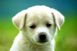 Kisah Inspirasi Cinta Seekor Anak Anjing Cacat