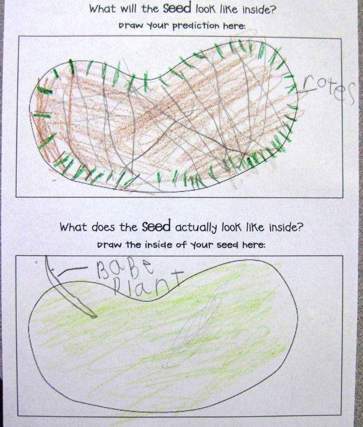 Kindergarten SuperKids Plants freebies – Parts of a Seed Worksheet
