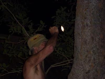 Iets horen in de inktzwarte duisternis van Shipandane night hide , is niet geruststellend.