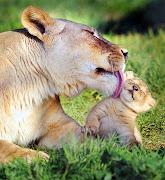Amazine Animal's Love