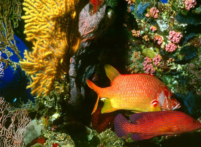 Coral Cod and SoldierFish