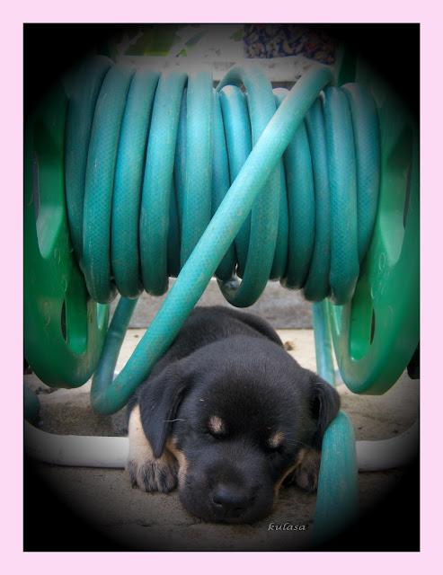 black puppy under a hose