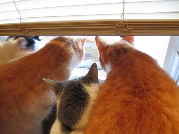 Funny cats - part 86 (40 pics + 10 gifs), cats looking out the window