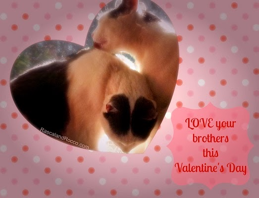 Rascal and Rocco kitty cat valentines card