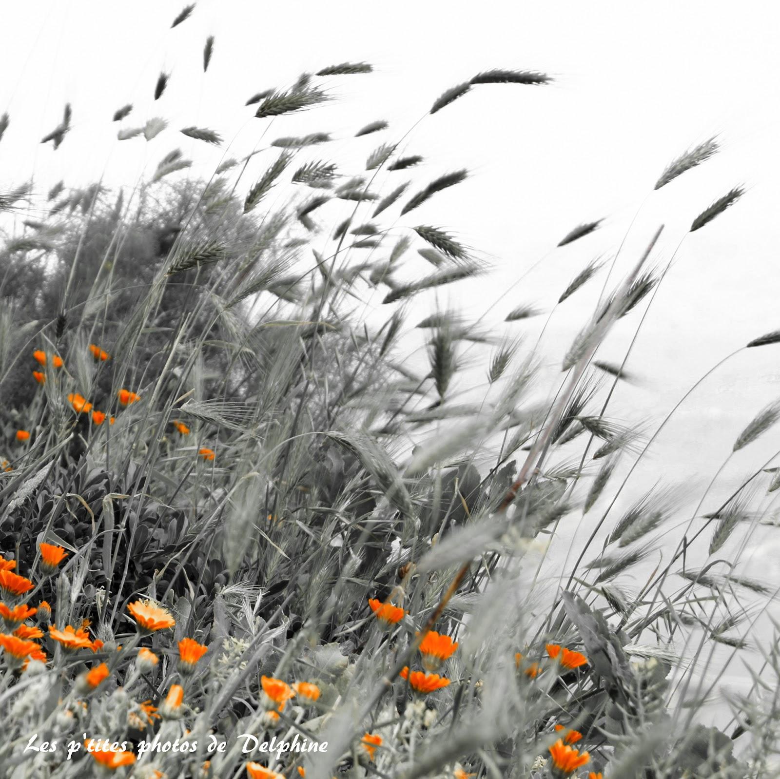 Les p 39 tites photos de delphine avril fleurs des champs en noir et blanc - Fleurs des champs blanches ...