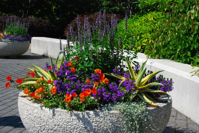 Colorful planters featuring orange, yellow and purple on the visitor center's patio.