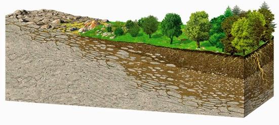 Escuela de vida sostenible general for A que se denomina suelo