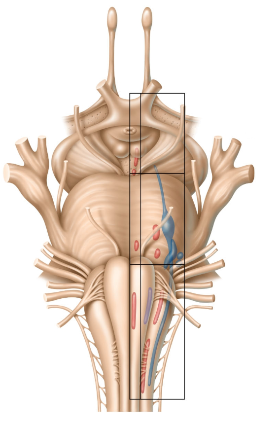 A Thousand Points of Transformation: Learning Brainstem Anatomy: A ...