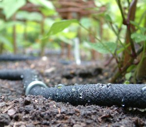 hose around the garden here s how to install soaker hoses in your