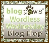 http://tailsofteach.blogspot.com/