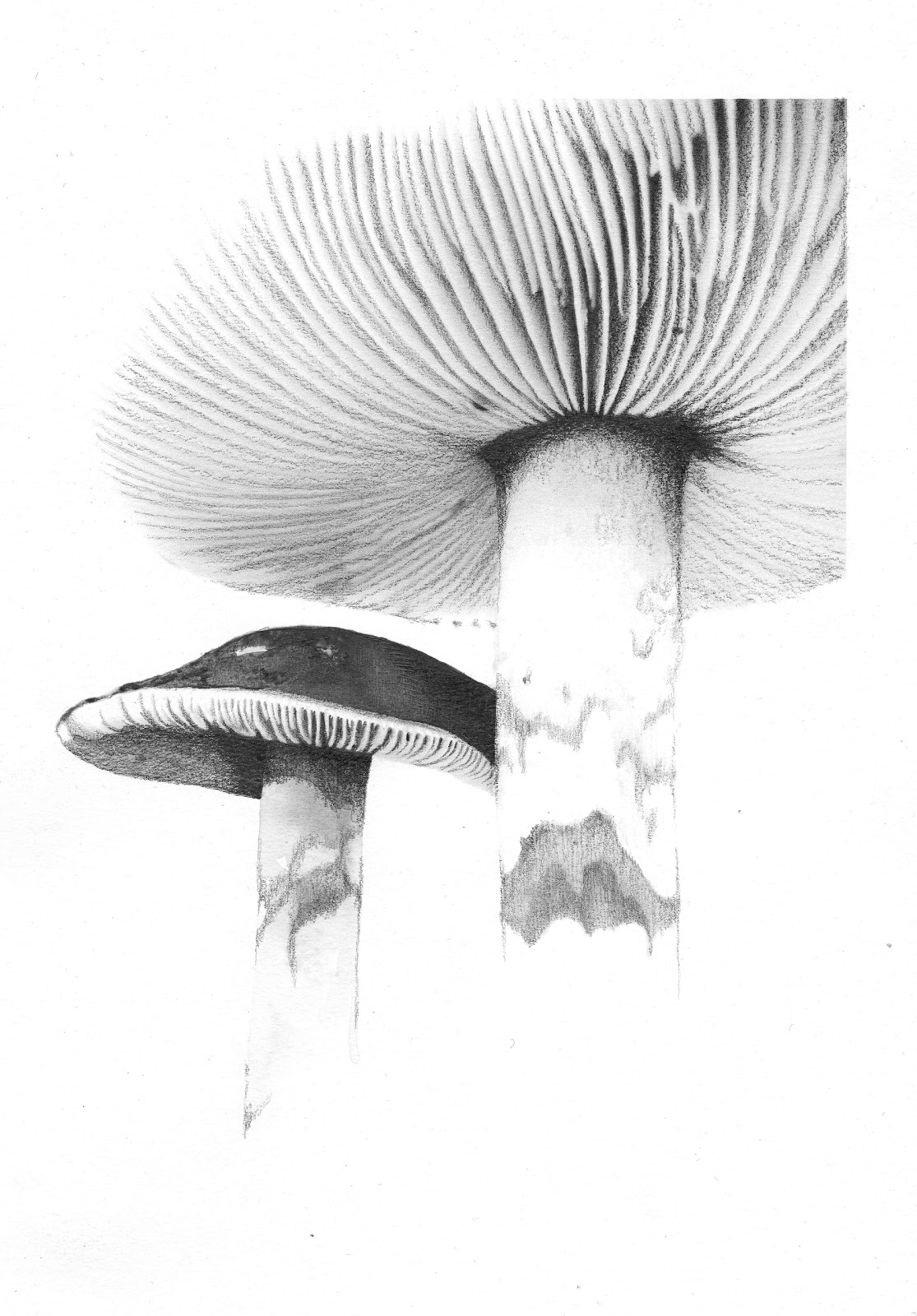 Stacey Rees Mushroom 1