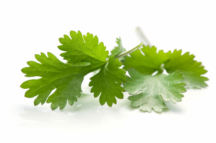 how cilantro, parsley, garlic together can benefit your health.
