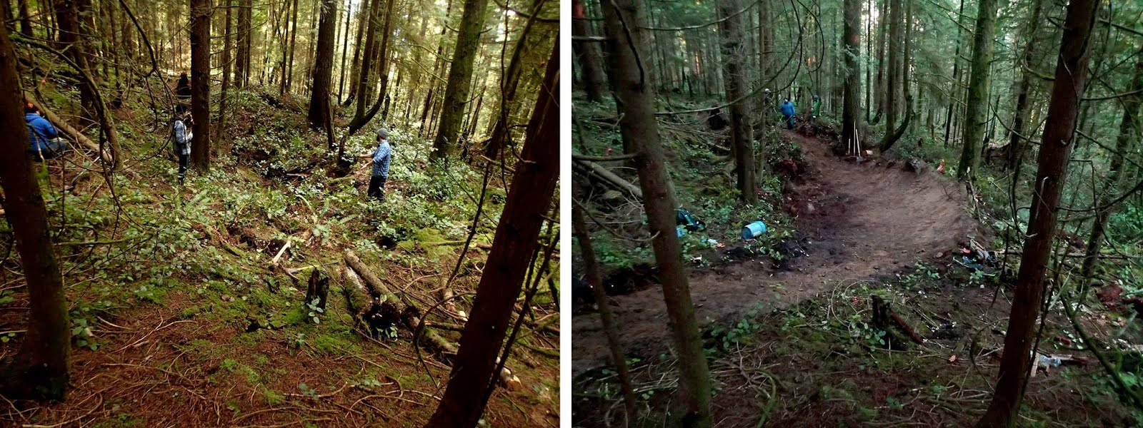 "NSMBA's Ongoing Rape of the Woods: ""Before and After"" Photos"