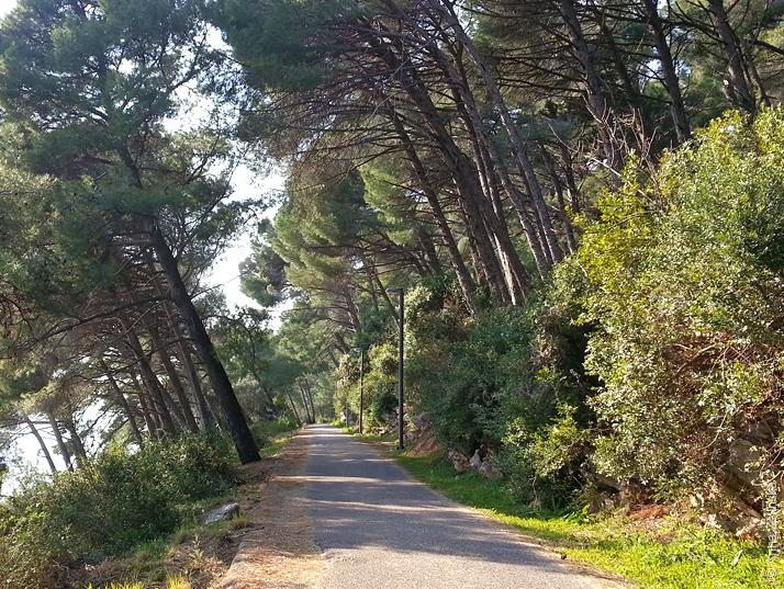 Прогулочная дорожка в Петроваце