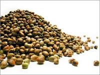 Comércio de sementes de cannabis