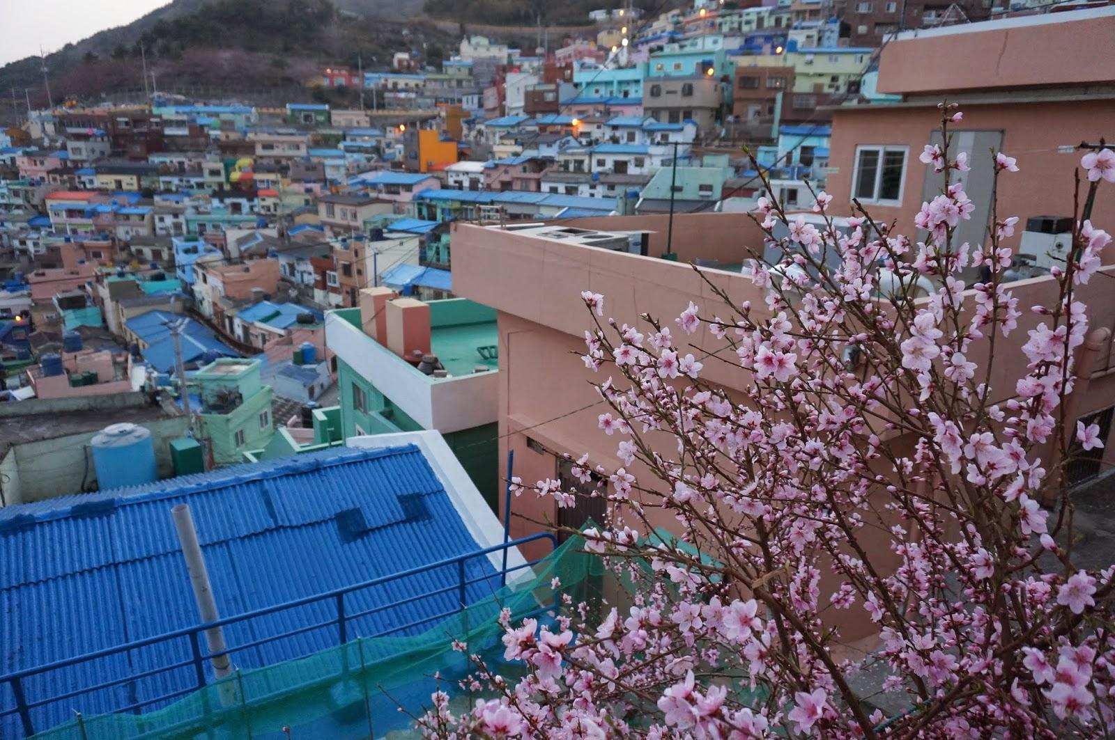 釜山甘川洞文化村的彩虹屋仔