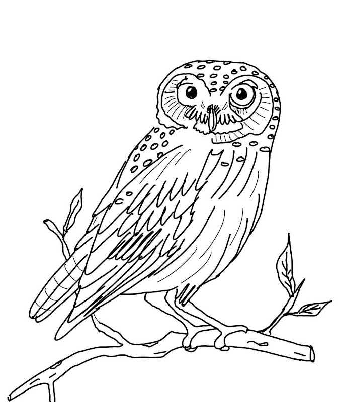 Owls Animal Coloring Pages Pictures title=