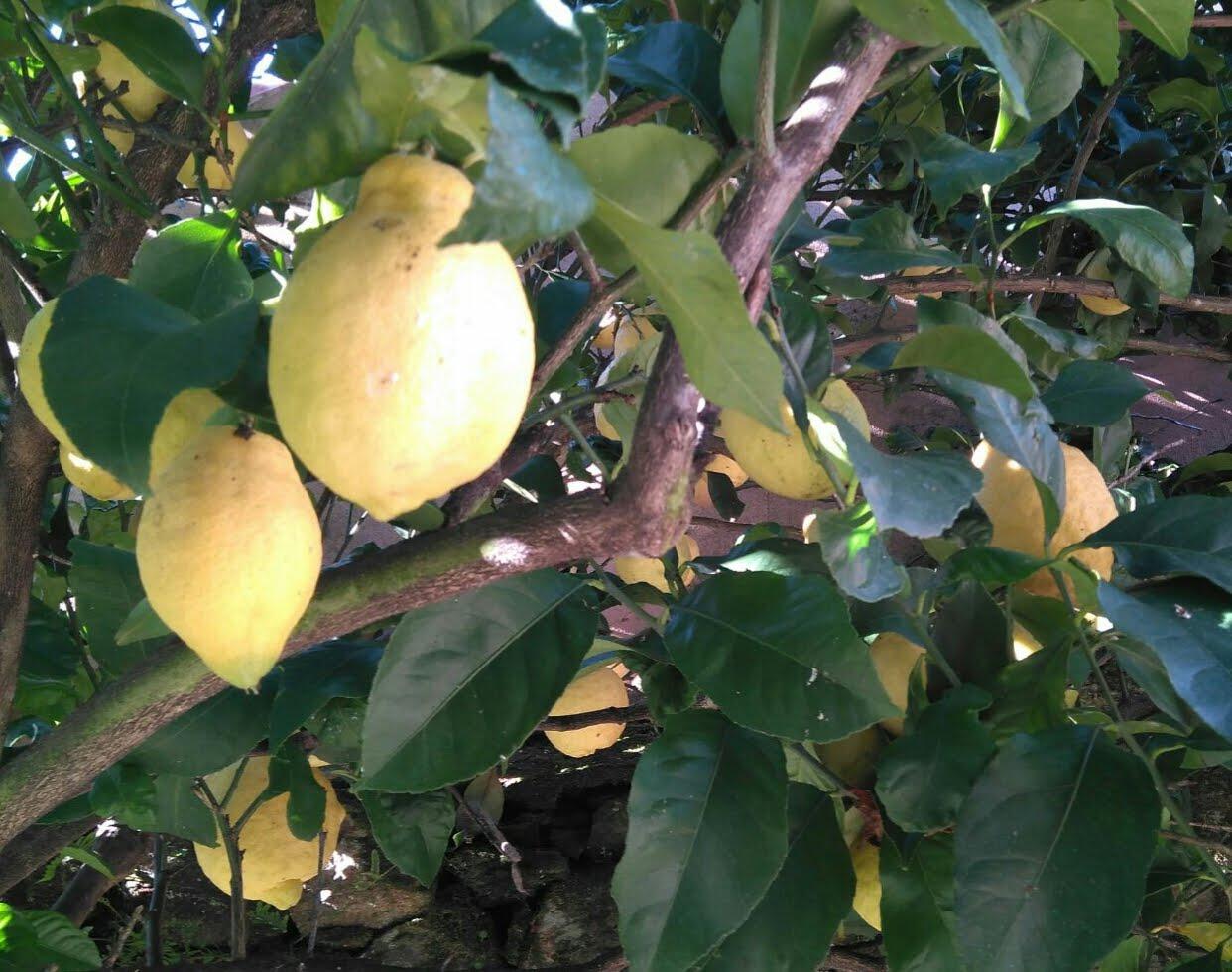 Limón...
