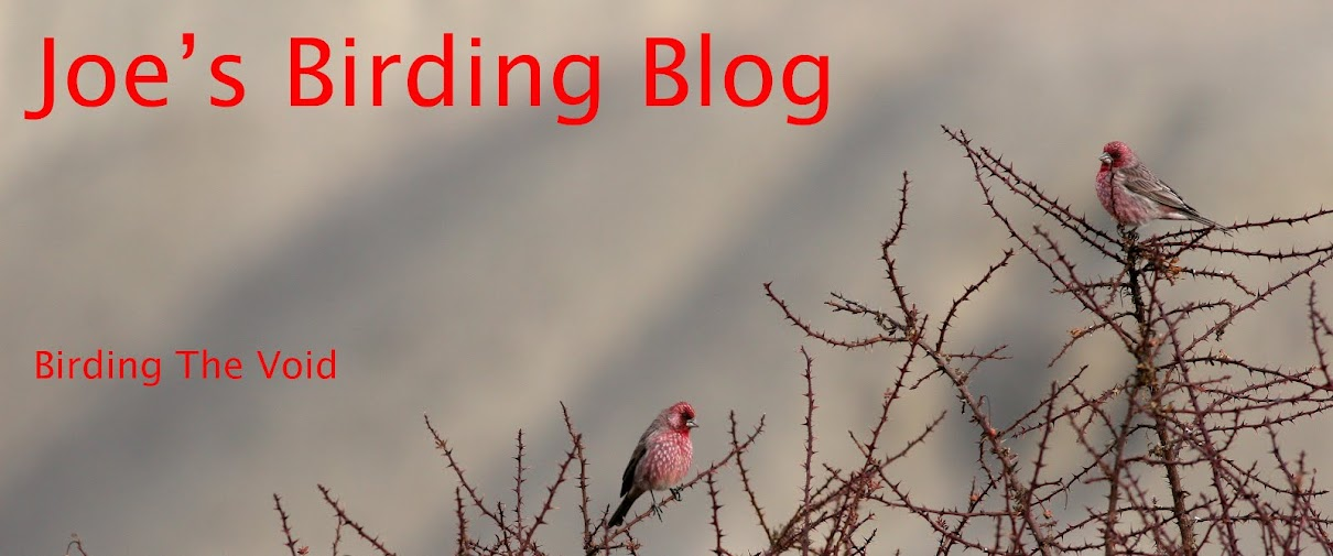 Joe's Birding Blog
