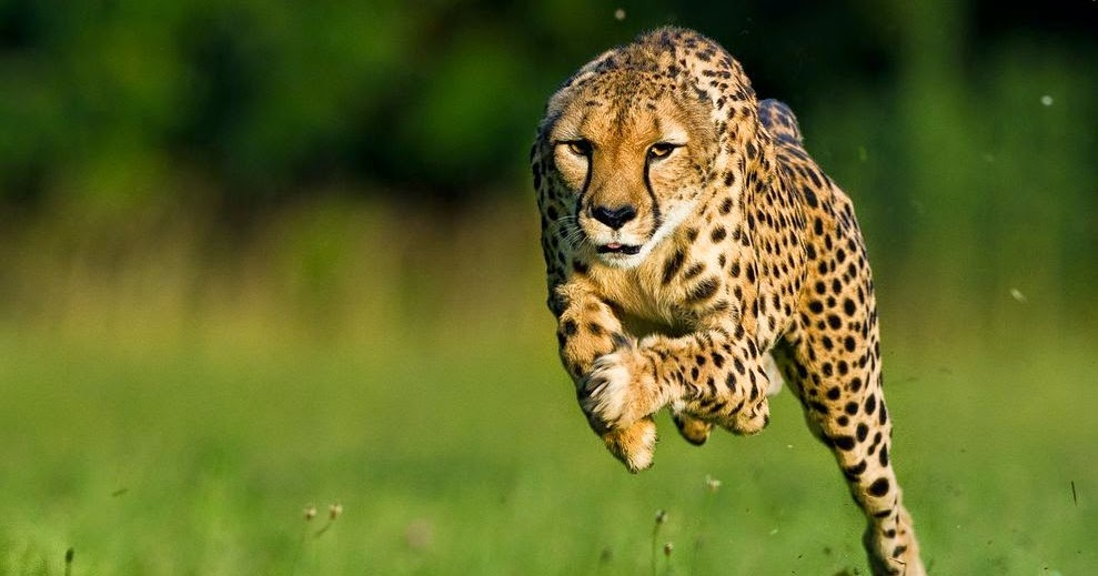 a review of a short fiction story of a cheetah and a sloth A sound of thunder is the most republished science fiction story of all time and is the origin of the sci-fi theme called the butterfly effect read it for free here  4.