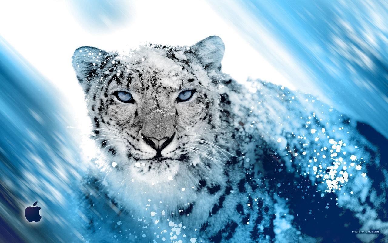 http://1.bp.blogspot.com/-b1-resSRFZA/TmuOLcUGwPI/AAAAAAAABwc/jSCMsv5t0rg/s1600/Snow_Leopard.jpg