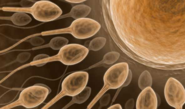 healthy male discharges 50 million sperm in a single ejaculation ...