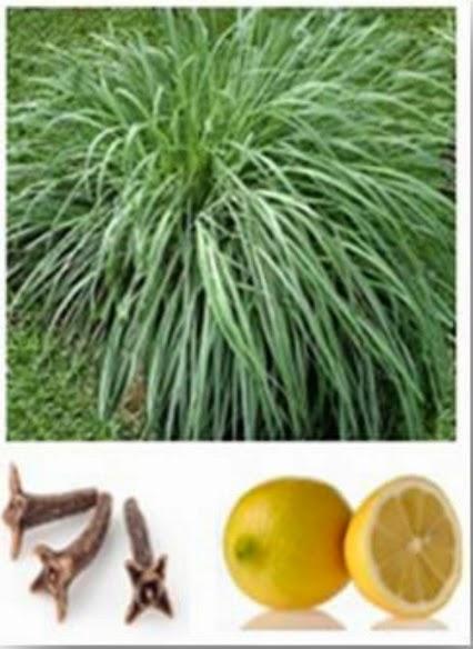 Si ayuda el aceite del árbol de té para el crecimiento de los cabello