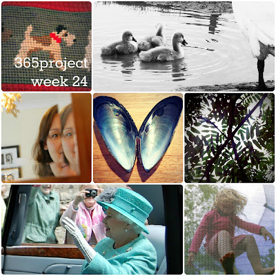 Five Go Blogging 365 Project week 24