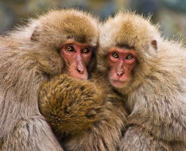 Increíbles fotografías de animales