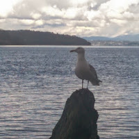 Seagull perched on a rock at Owen Beach