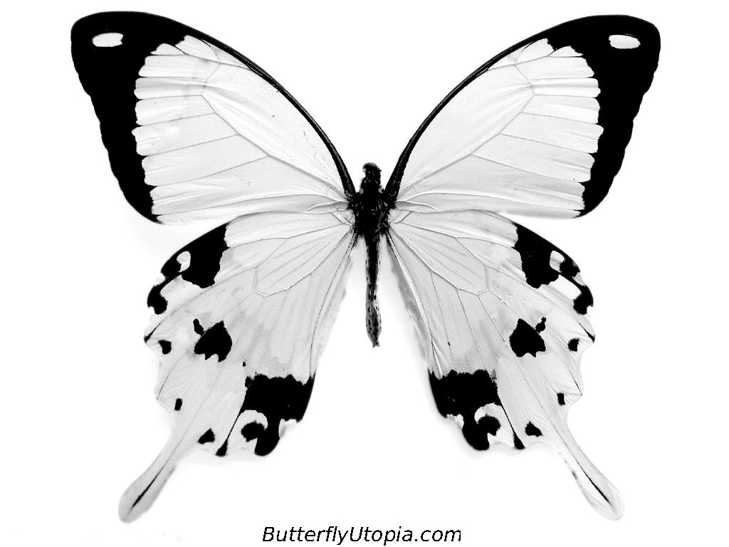 School portfolio butterflies can bring life to a dead scenery and they can be very magical at times butterflies have many symbolic meanings biocorpaavc