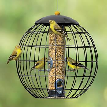 Birdseverywhere.com