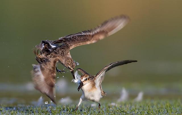 beautiful birds pictures