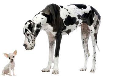 Los perros pequeños son más activos y tienen más movilidad que los grandes