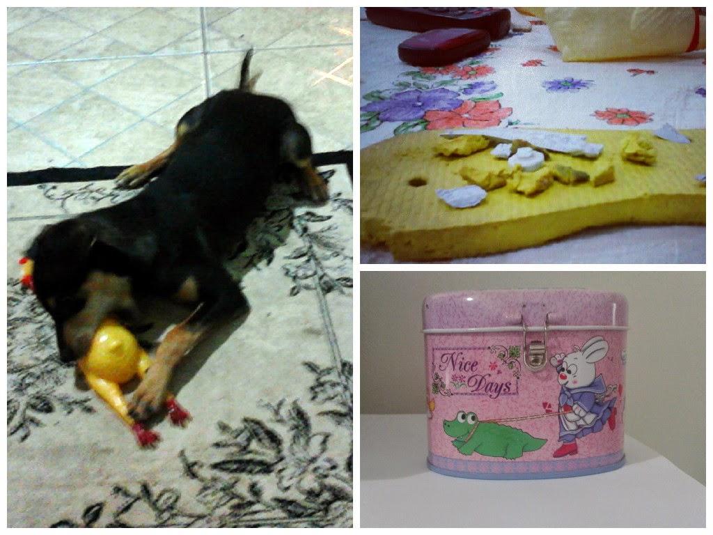 cachorros que comem chinelos