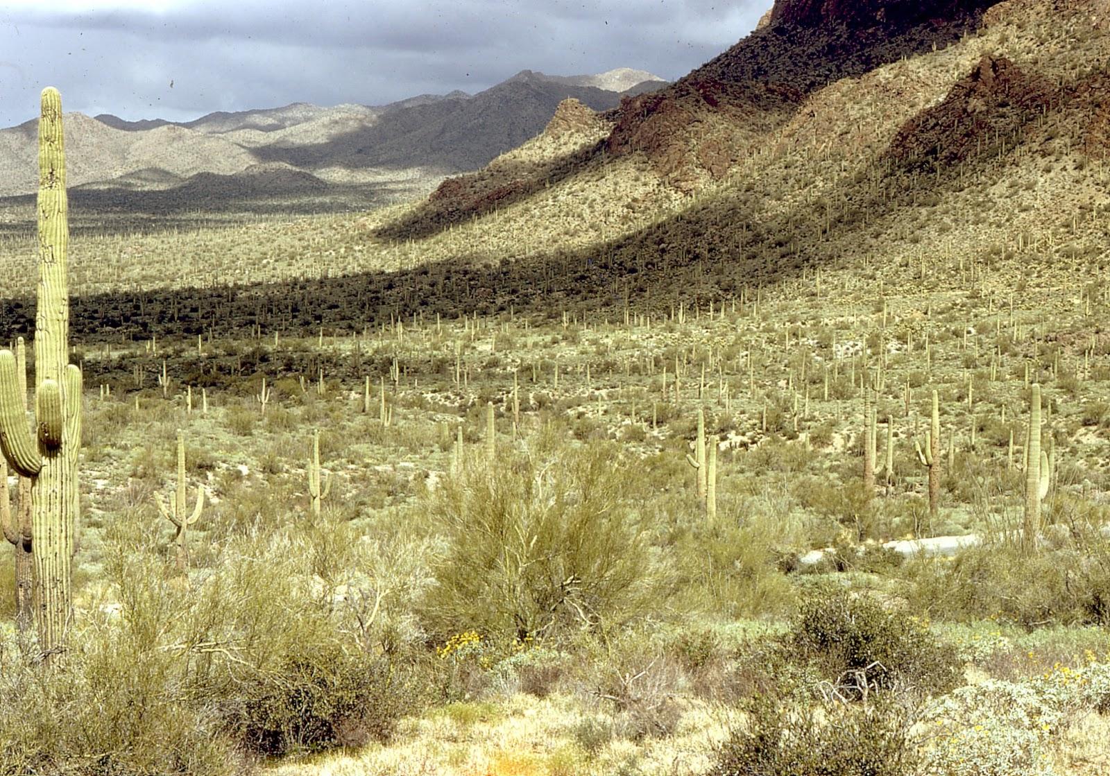Dazzling Desert Adventures What Desert Should I Go To