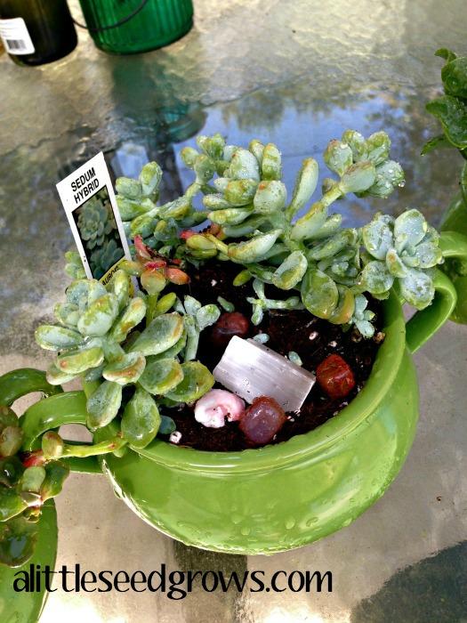 DIY Succulent Gift Idea [A Little Seed Grows - Blog]