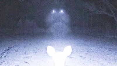 Εντοπίστηκε UFO μέσα σε δάσος του Μισισίπι [Βίντεο]
