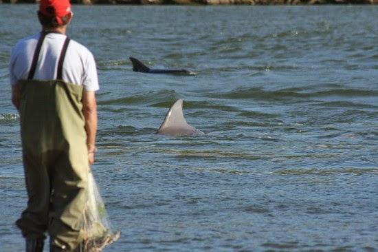 Άνθρωποι και δελφίνια ψαρεύουν μαζί