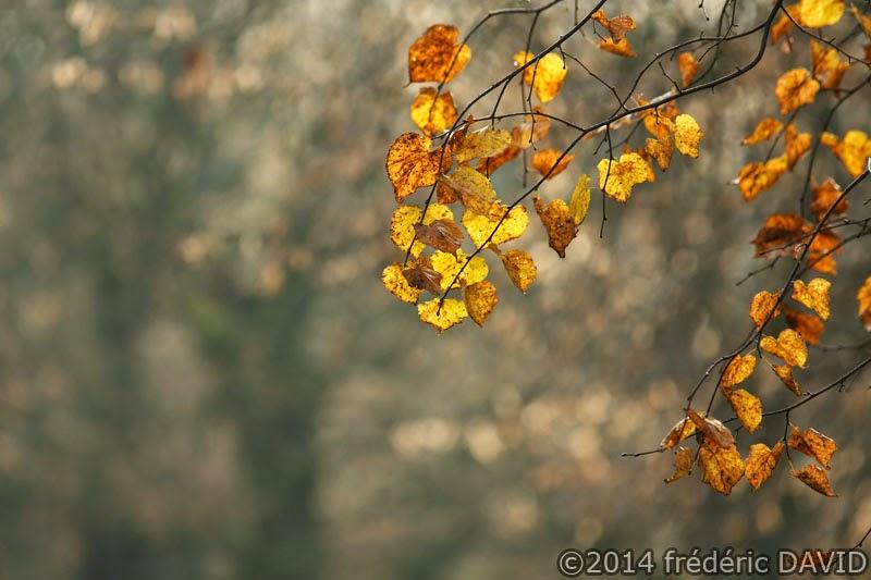 arbre automne feuilles dorées Seine-et-Marne