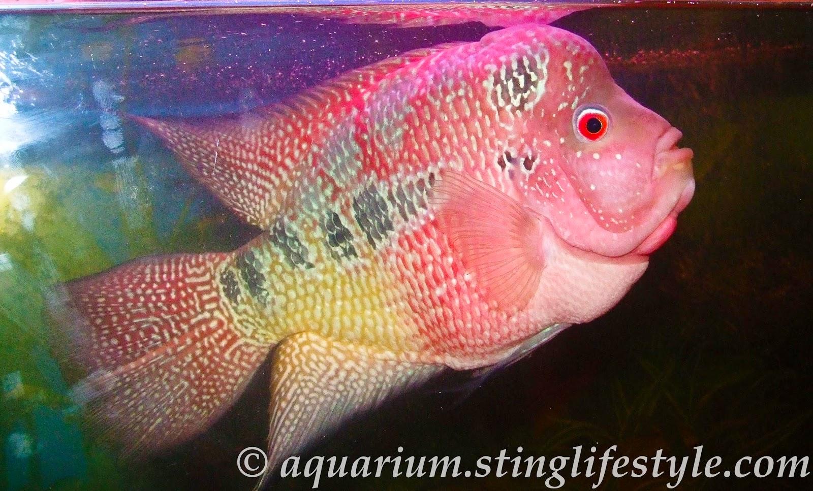 Vastu Aquarium Fish