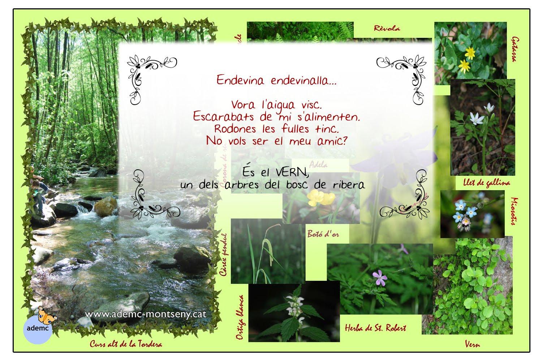 Itineraris pedag gics del montseny postals itineraris for Les piscines del montseny