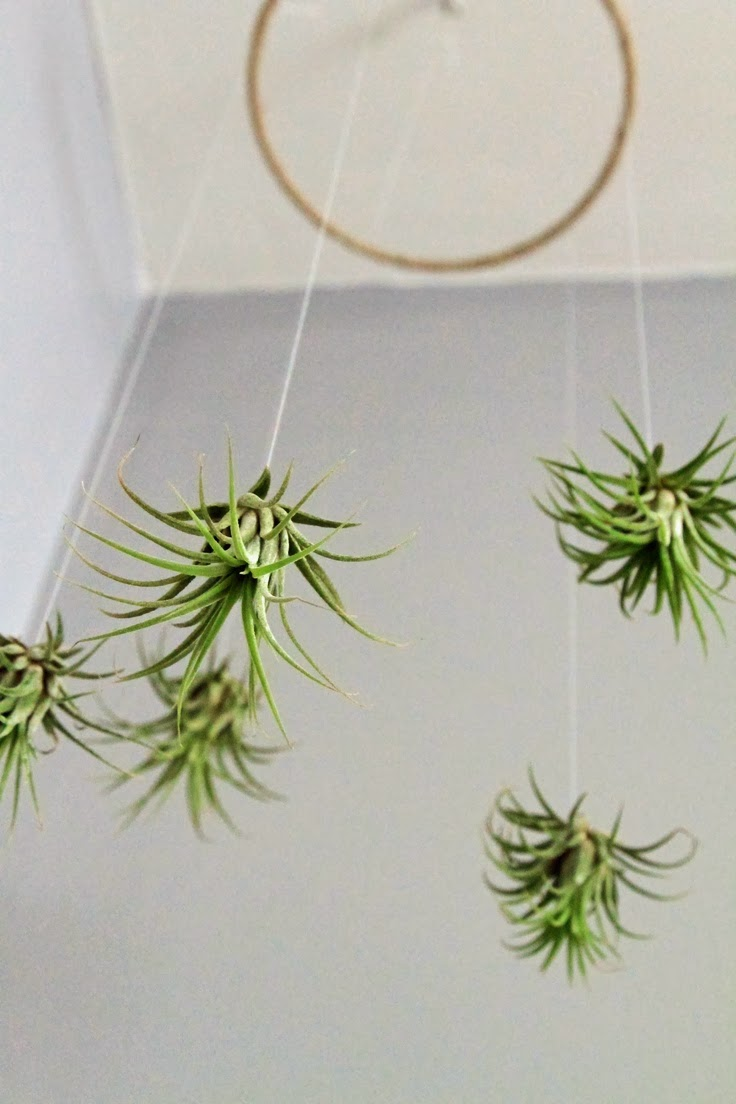 Dirtbin Designs Air Plant Art