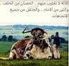 Ustadz Abdul Somad : Jika Mau Selamat Jangan Dekati yang 3 ini  | LihatSaja.com