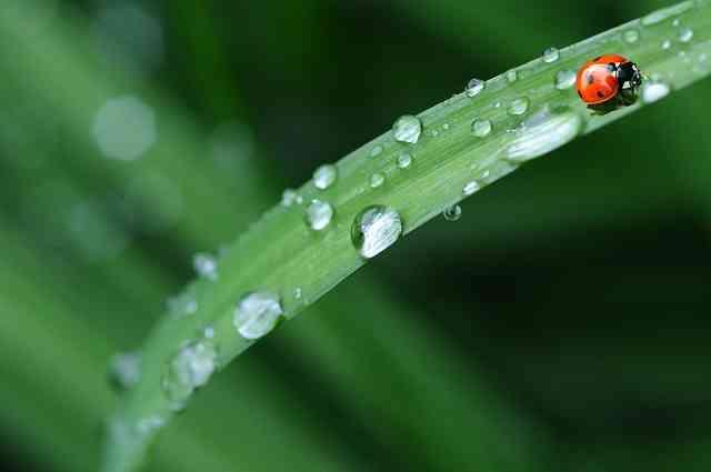 Yağmur Mevsimi