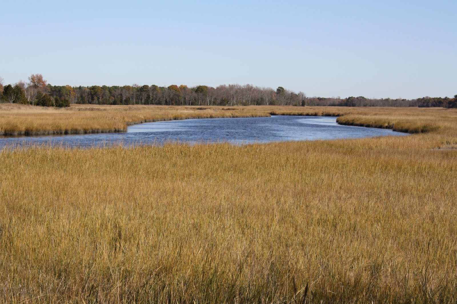 dividing creek chat New jersey duck hunting : a state with an abundant amount of waterfowl share with others your new jersey duck hunting experiences.