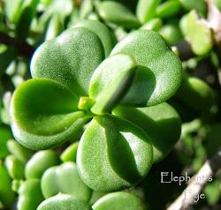 Plant Fair 2015    18-19 April at Kirstenbosch