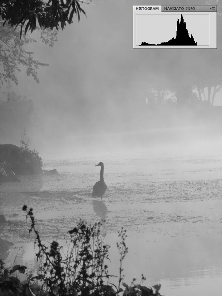 Low Contrast Black and White Foggy Morning with Heron | Boost Your Photography